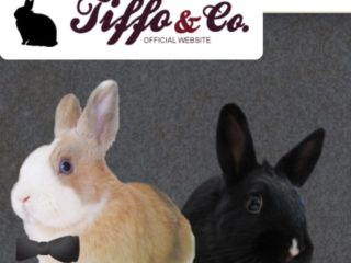 Tiffo Rabbit